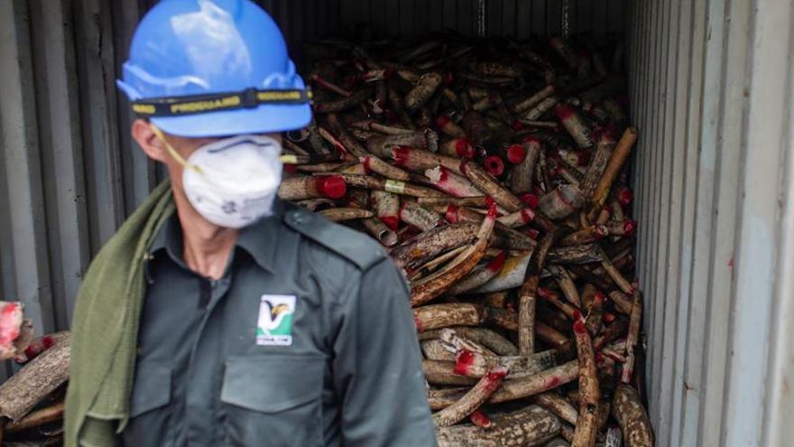 China prohibirá el comercio con marfil en 2017