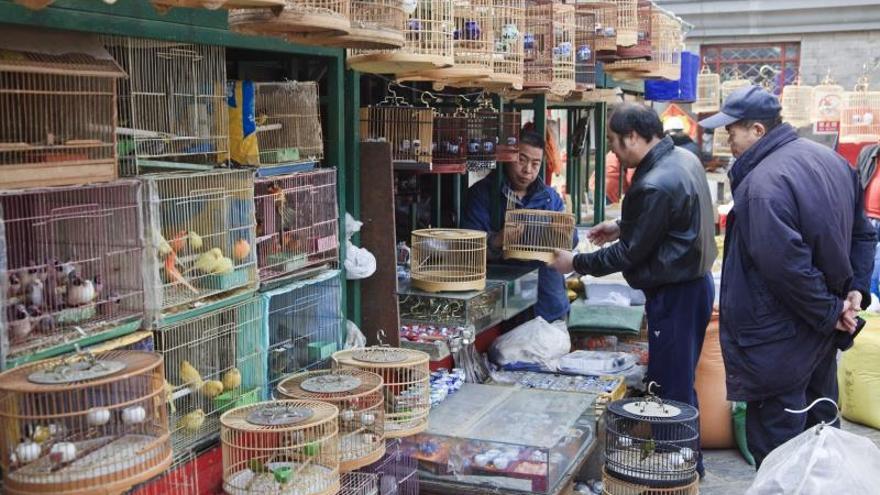 WWF urge a los gobiernos asiáticos el cierre de mercados ilegales de animales