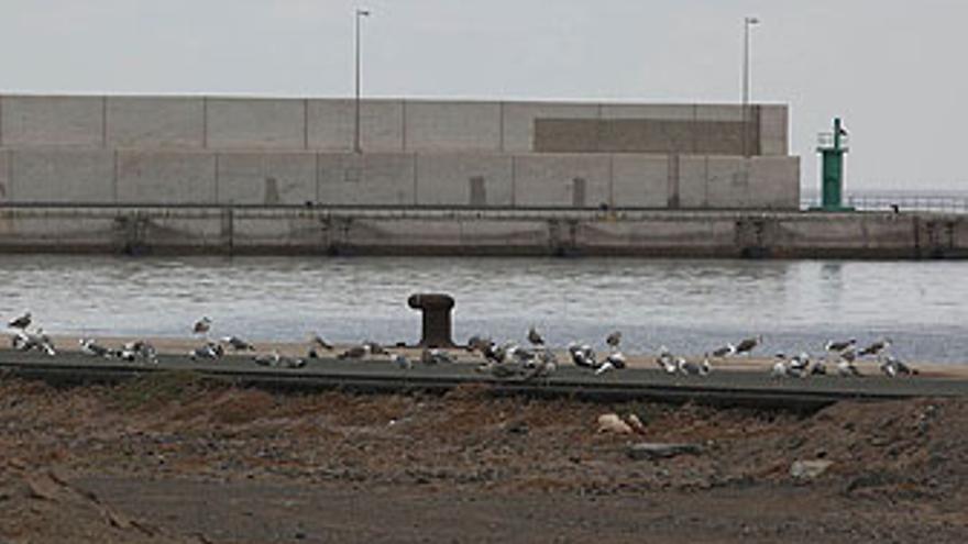 Muelle de Arinaga sin un solo barco. (QUIQUE CURBELO)