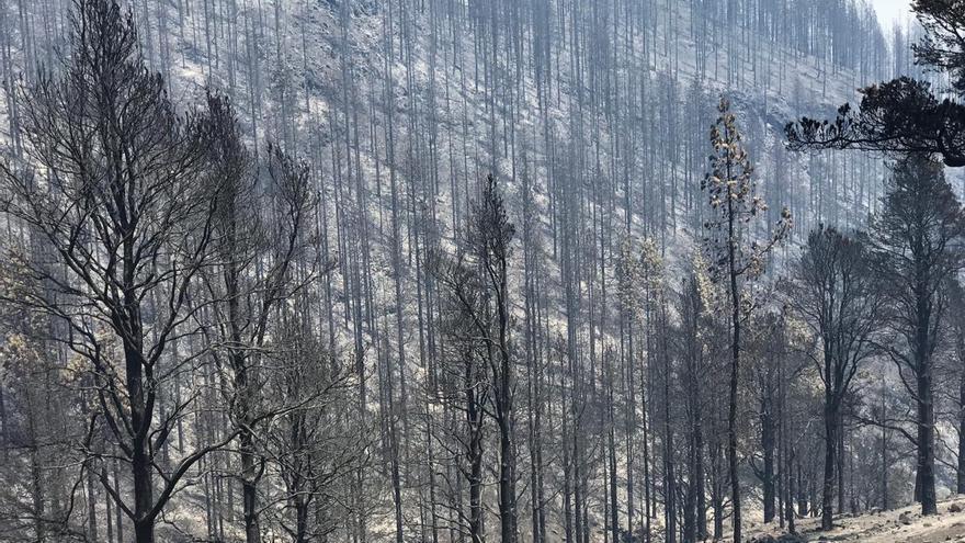 Superficie forestal quemada en Fontanales.
