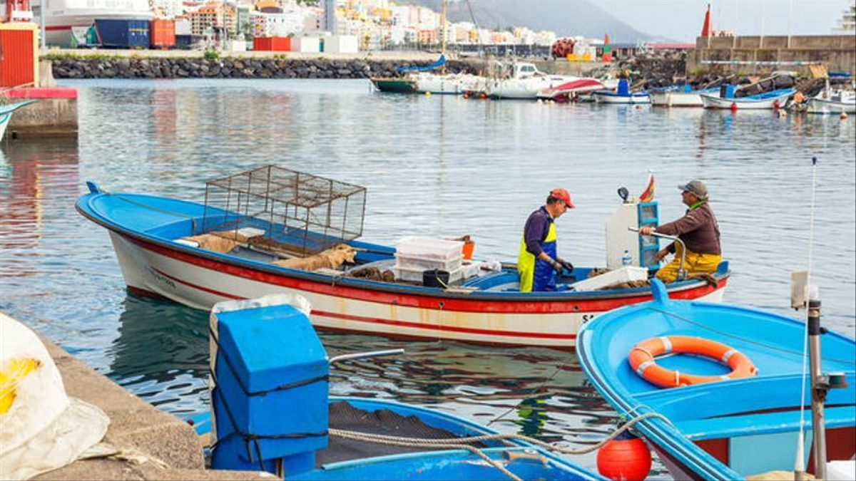 Puerto pesquero de Santa Cruz de La Palma.