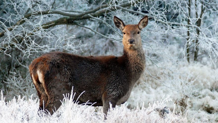 """Piden suspender la temporada de caza en zonas afectadas por el temporal  para evitar daños """"irrecuperables"""" en la fauna"""