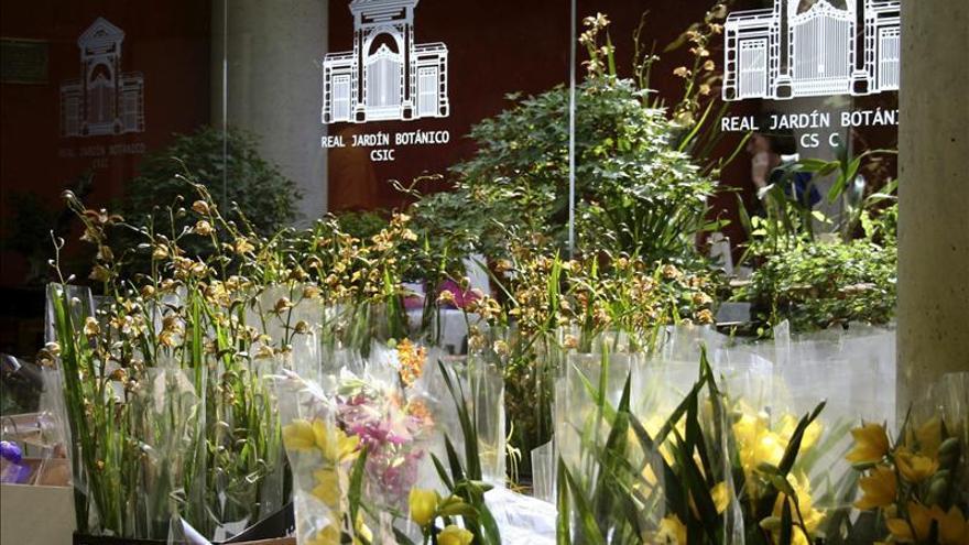 Día Internacional de la Fascinación por las plantas se rinde a las orquídeas