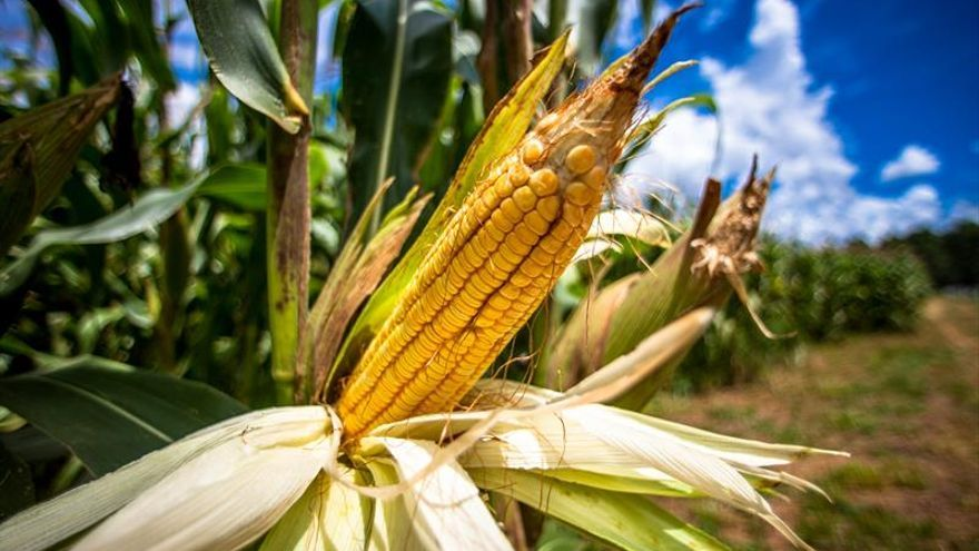 Brasil recogerá una cosecha récord de granos en 2017, según prevé el Gobierno