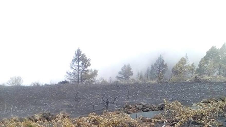 Se calcula que la superficie afectada por el incendio en los municipios de Fuencaliente y de El Paso abarca unas 40 hectáreas. Foto: Consejo Regulador de La Denominación de Origen de Vinos La Palma.
