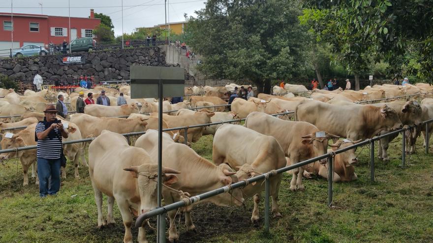 Imagen de archivo de la Feria de Ganado de San Isidro.