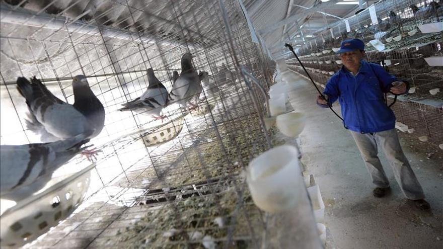 Confirman tres nuevos casos de contagios de H7N9 en el este y sur de China