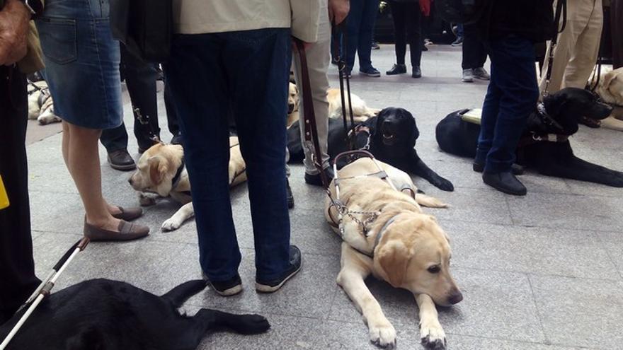 Concentración de perros guías (28-04-18)