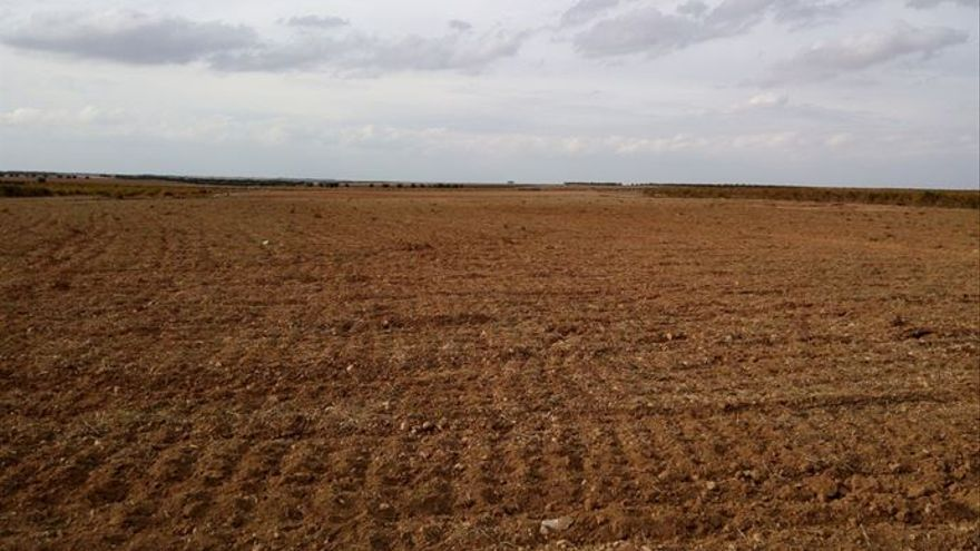 Parcela convencional sin aplicación de productos químicos en La Mancha