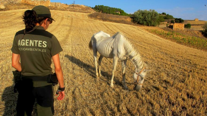 Agente Medioambiental ante uno de los múltiples casos de maltrato o abandono animal que se dan en el medio natural
