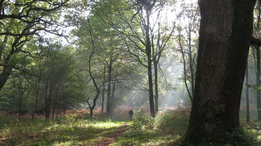 Savernake Forest / Peter Turvey vía Flickr (CC)