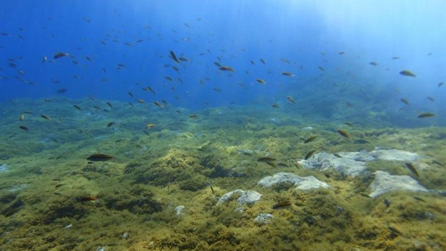 Hasta el momento, sólo se han estudiado cuatro zonas con emisión natural de CO2 y de éstas solo dos ocurren en aguas poco profundas que faciliten su estudio. (Foto cedida)
