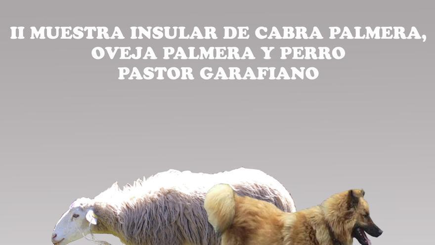 En la imagen, ejemplantes de cabra y oveja de raza palmera y perro pastro garafiano.