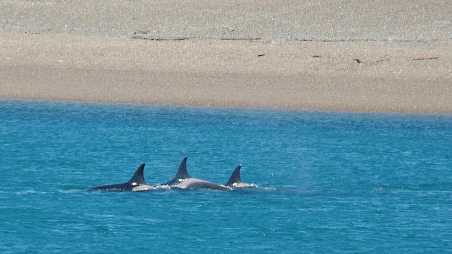 Orcas frente a las costas de Cabo Norte.