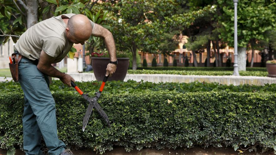 El servicio de jardinería es uno de los contratos que el Gobierno de Aragón reserva para centros especiales de empleo y empresas de inserción