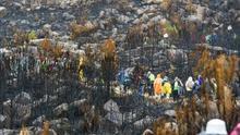 Ley de montes mejorará su gestión y evitará fuegos interesados, según Magrama /Efe