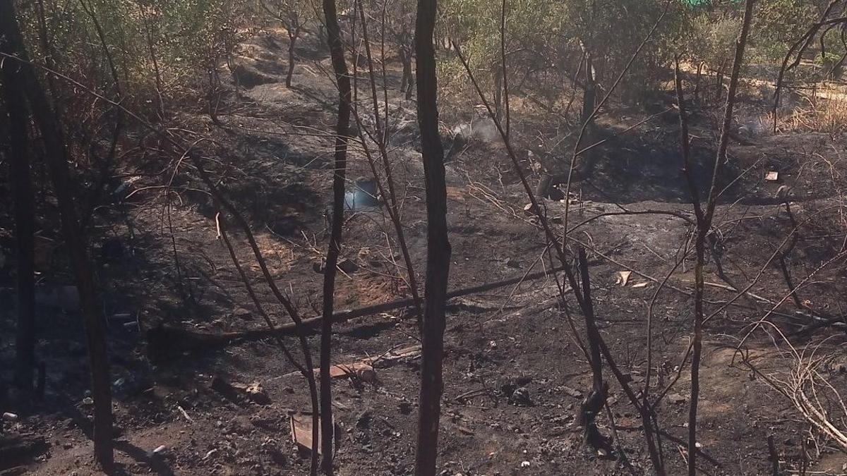 Efectos del incendio en la Dehesa de la Villa