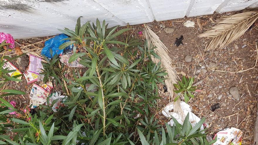 Basuras y pollos muertos en un jardín de la urbanización Benahoare. (Foto facilitada por el PP).