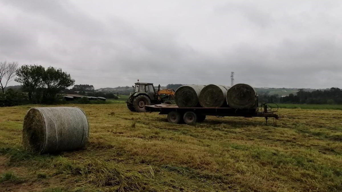 Archivo - Trabajos en el campo, rural, agricultur, PAC, tractor.