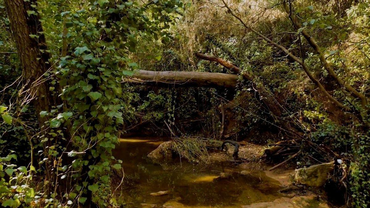 Imagen del arroyo Bejarano en la sierra de Córdoba.