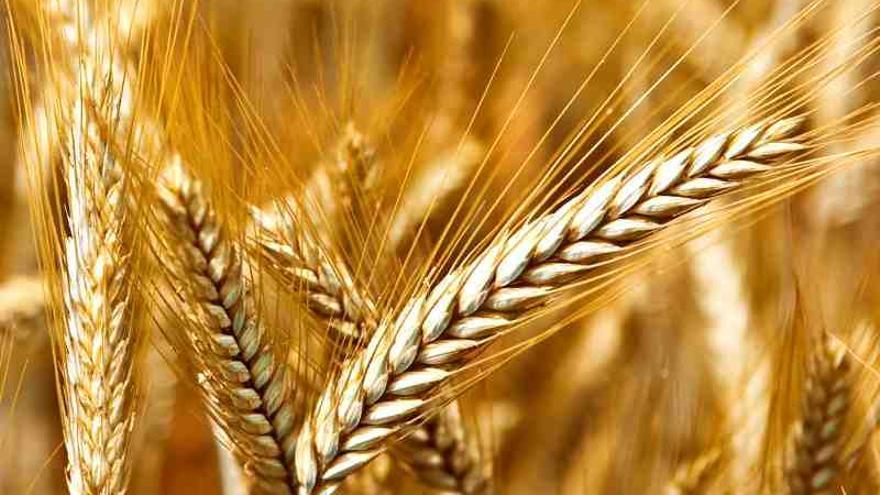 Las ayudas beneficiarán a 90.000 agricultores y ganaderos