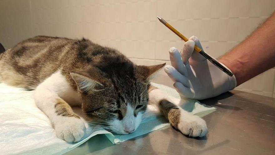 Dante, en el veterinario