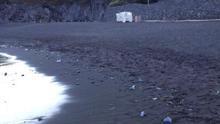 En la imagen, ejemplares de medusas, el miércoles 23 de abril, en la orilla de Los Cancajos.