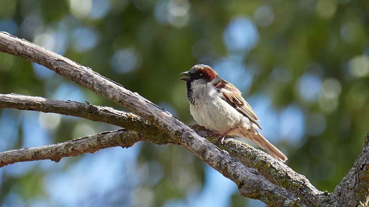 Foto tomada por un trabajador voluntario del programa BiObserva para el seguimiento de aves en las instalaciones del grupo