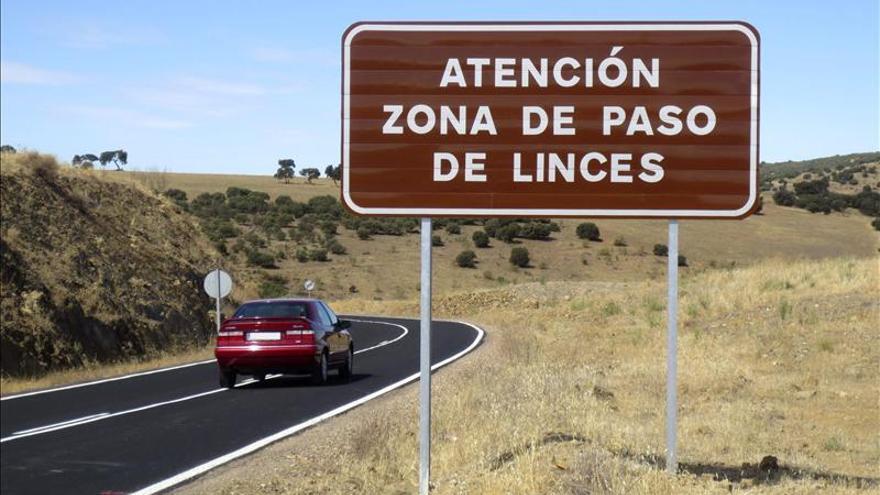 Hallan un lince muerto en un lazo ilegal cerca de Andújar (Jaén)