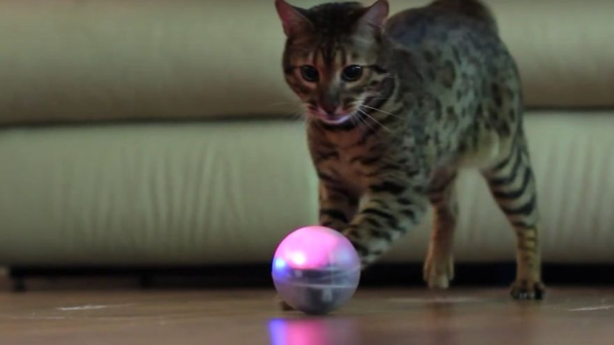 Un proyecto español busca que los animales se entretengan solos con un robot que detecte su movimiento (Imagen: Sphero | YouTube)