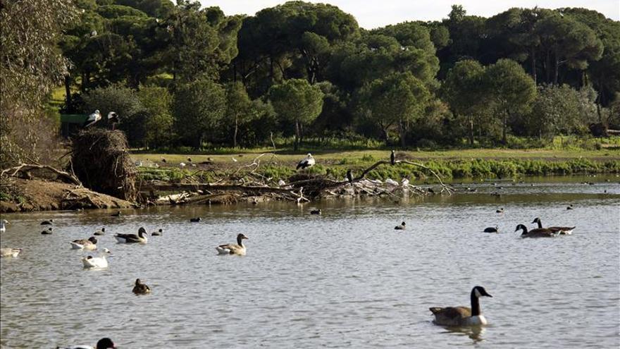 Cañada de los Pájaros, un valioso humedal de Doñana, en peligro de extinción