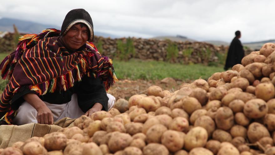 La red campesina emplea menos del 25% de las tierras agrícolas para cultivar alimentos que nutren a más del 70% de la población. José Manuel Román / AeA.