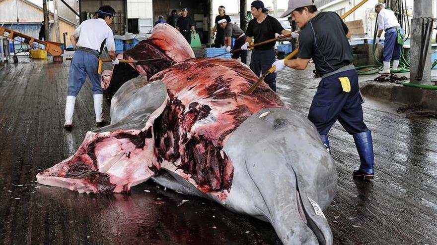 Más de 30 países presentan una protesta contra la caza de ballenas de Japón