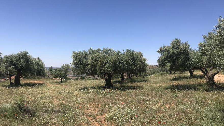 Cubierta en olivar