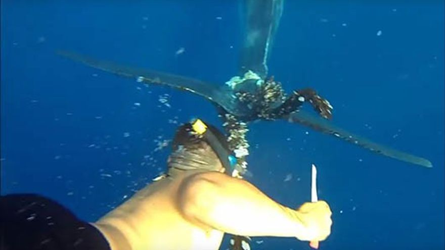 César Espino rescatando a la ballena