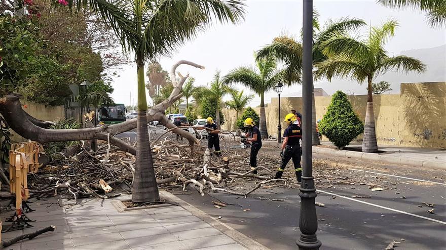 En la imagen, los bomberos retirando los restos de uno de los árboles derribado por el viento en el Valle de Aridane.