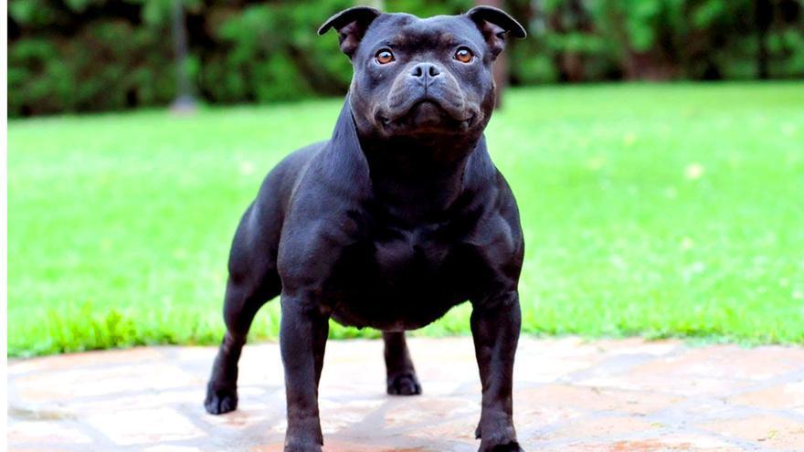 Imagen de un perro potencialmente peligroso.