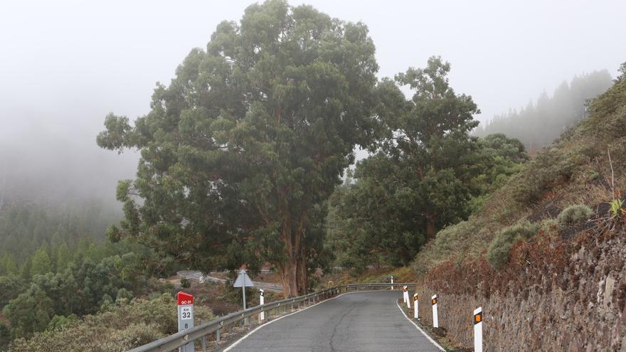 Carretera de Artenara a Valleseco. (ALEJANDRO RAMOS)