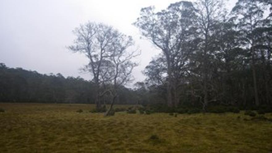 Eucaliptal salvaje y casa rural en Tasmania.