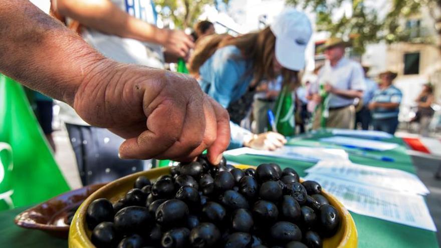 Andalucía facilita el acceso a subvenciones al sector de la aceituna de mesa.