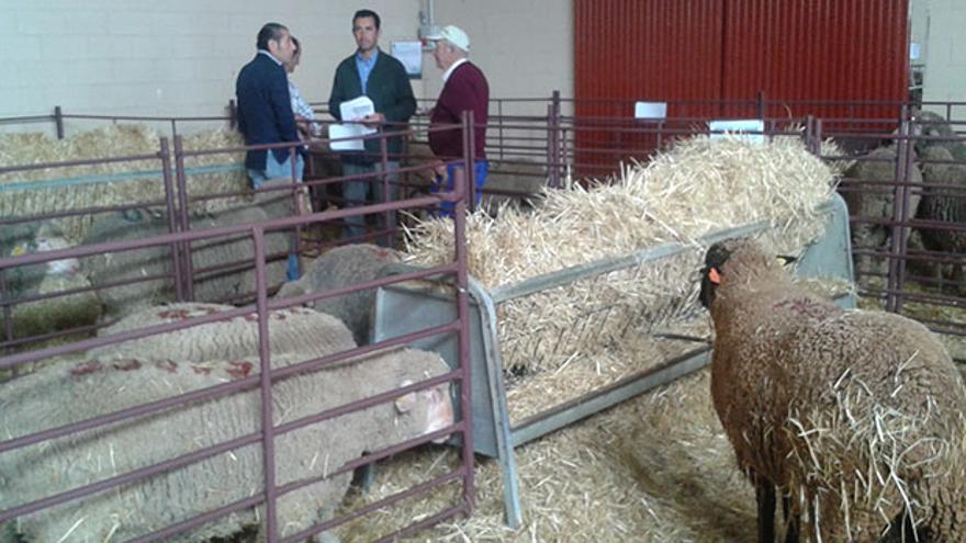 Subasta del ovino en la feria