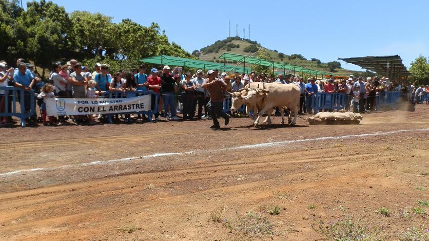 Imagen del concurso de arrastre celebrado el pasado 11 de junio en la Feria Ganadera de San Antonio del Monte, en Garafía.