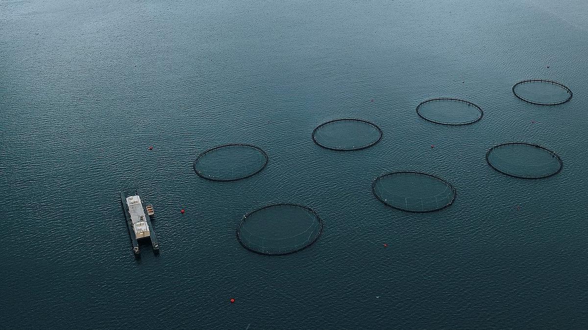 Instalaciones de acuicultura.
