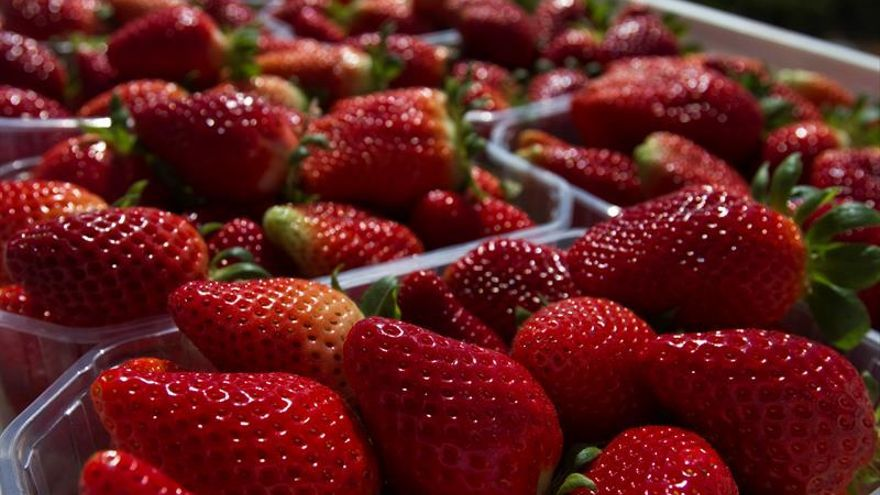 La sobreproducción de alimentos lleva a malgastar recursos, según experto
