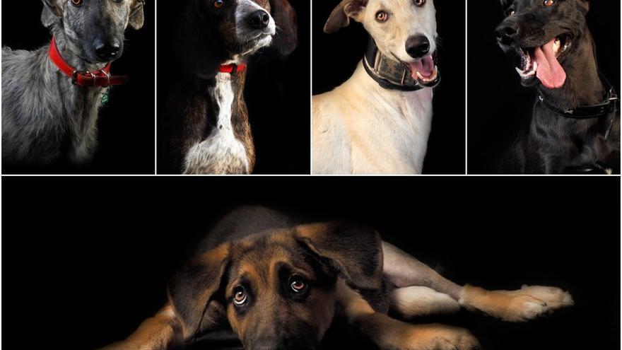 Bufón (AXLA), Lextor (Txikas de Etxauri), Poli (APA Más Vida), Xisca (perrera de Aranjuez / ARPA) y Uppe (CPA de Torrejón) ©Fotopets