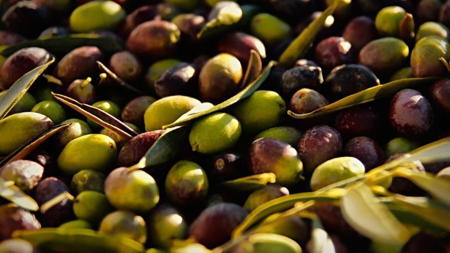 La oliva se ha convertido en un activo estratégico para el Gobierno de España.