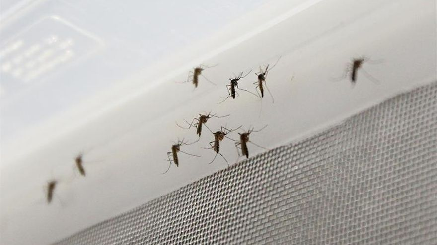 Científicos de EE.UU. localizan anticuerpos que protegen del zika