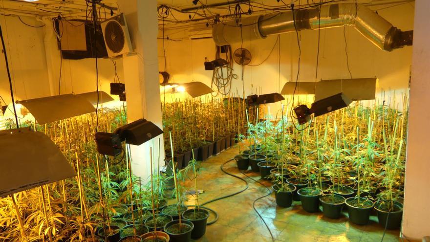 Plantación de marihuana localizada en una vivienda de Mundaka (Bizkaia)