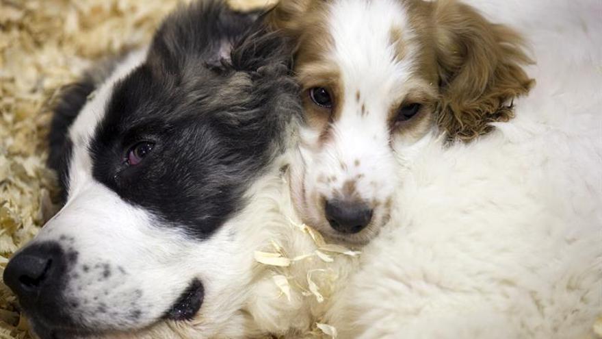 En España se abandonan más de 137.000 animales de compañía cada año.