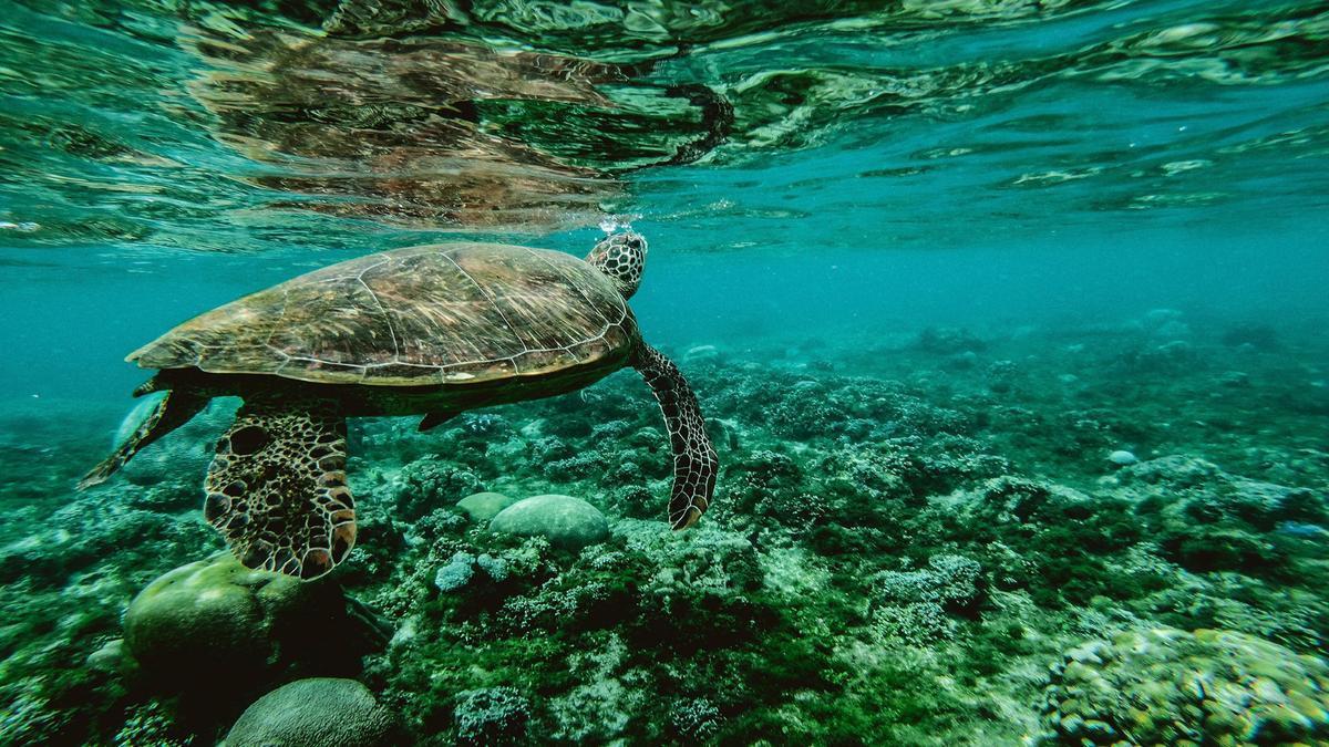 Una tortuga marina.